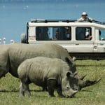 Safari Destination at Guide for info