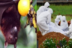 Latest Info of Nipah Virus - How you can Prevent it