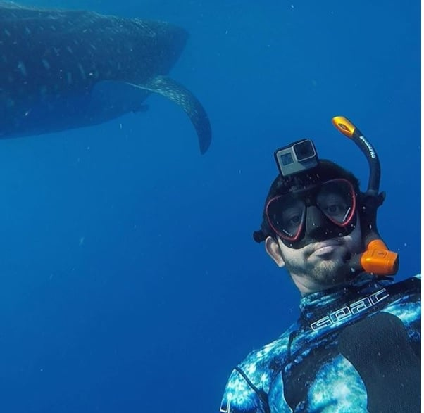Dubai Crown Prince Shaikh Hamdan swimming with Giant Whale shark